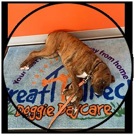 great neck doggie daycare